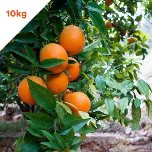 Naranjas Pedido