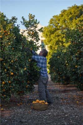 comprar-naranjas