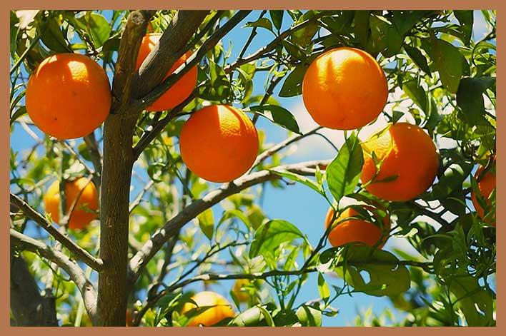 Métodos-de-conservación-de-la-naranja-