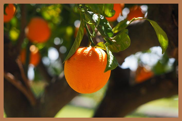 Naranja-Sanguina
