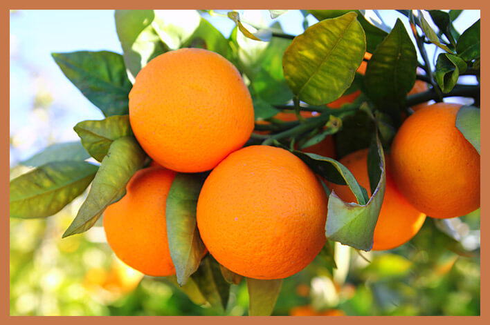 beneficios-naranja